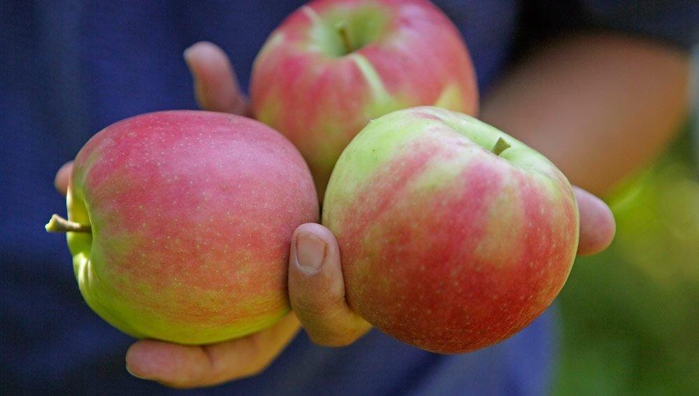Der Apfel – Sinnbild für die Süße des Lebens