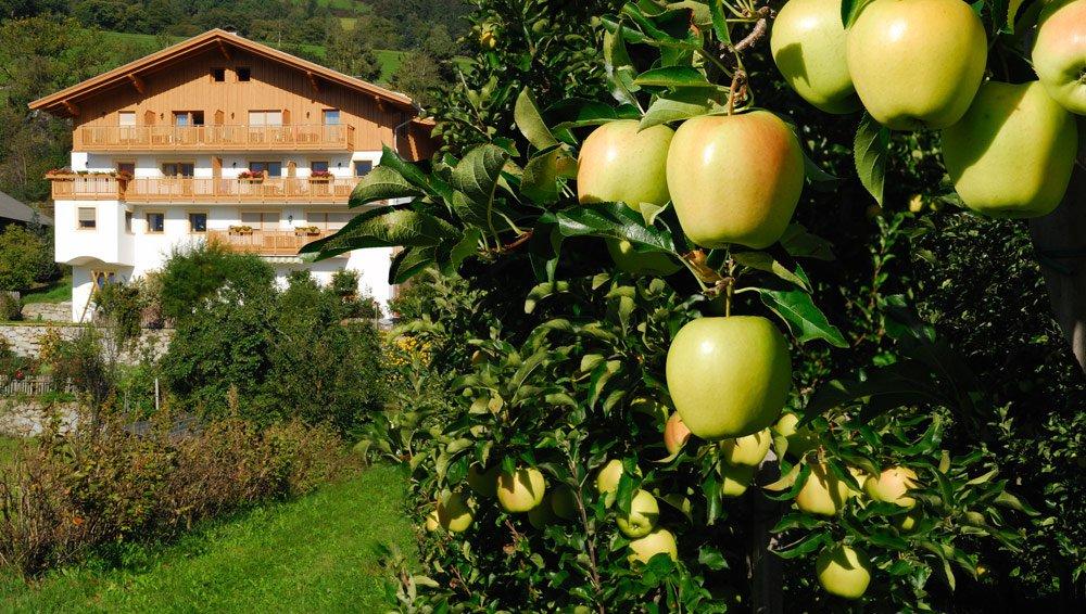 La mela tirolese – storia di un successo