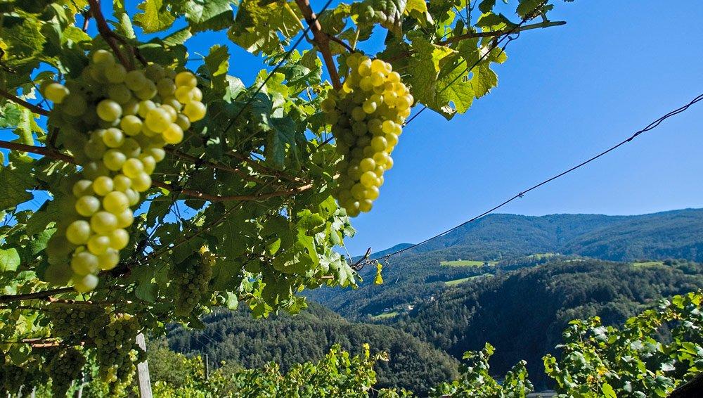 Che ne dite di una gita sulla strada del vino nella primavera sudtirolese